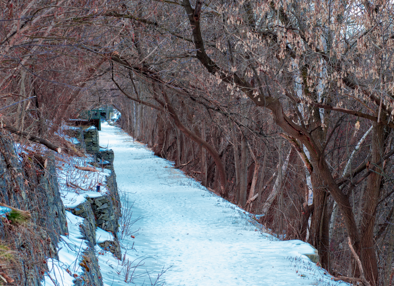 river-walk-riverwalk-library-winter-trees-downtown-nashua-nh-photograph-by-bob-bettencourt